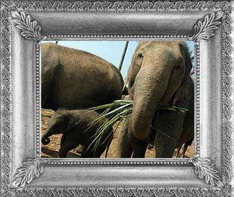 Výstava fotografií - Oni sloni, leden 2013